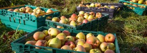 141102-Apple_gleaning-008-ZF-1429-38398-1-001-e1423826674349-1389x500